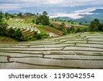 rice terrace in rural thailand. | Shutterstock . vector #1193042554