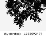 tree trunk leafless black and... | Shutterstock . vector #1193092474