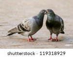 Two Pigeon Kissing By Inter...