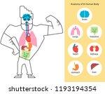 anatomy of human body. body... | Shutterstock .eps vector #1193194354