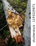 storm damage and broken tree in ...   Shutterstock . vector #1193229871