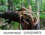 storm damage and broken tree in ...   Shutterstock . vector #1193229874