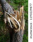 storm damage and broken tree in ...   Shutterstock . vector #1193229877