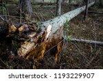 storm damage and broken tree in ...   Shutterstock . vector #1193229907