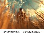 an astronaut discover a new... | Shutterstock . vector #1193253037