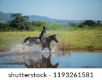 horse and jockey outdoor  | Shutterstock . vector #1193261581