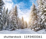 winter pine forest in sunny day   Shutterstock . vector #1193403361
