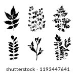 leaves imprints set isolated on ...   Shutterstock .eps vector #1193447641