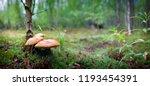 Airy Mushroom House In Moss....