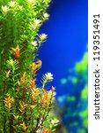 Tropical Underwater Plants...