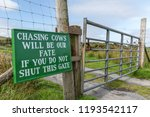 """""""chasing Cows Will Be Our Fate..."""