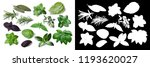 set of spicy herbs. separate... | Shutterstock . vector #1193620027