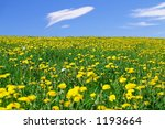 Springflower Field