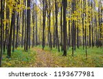 autumn forest. autumn maple... | Shutterstock . vector #1193677981