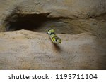 yellow and black snake | Shutterstock . vector #1193711104