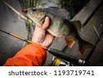fishing background. trophy... | Shutterstock . vector #1193719741