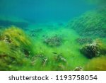 rocky seabed covered by... | Shutterstock . vector #1193758054
