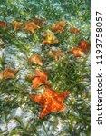 sea stars underwater with... | Shutterstock . vector #1193758057
