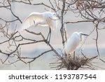 egret heron  waterfowl  flying... | Shutterstock . vector #1193787544