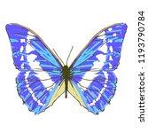 beautiful blue butterflies ...   Shutterstock .eps vector #1193790784