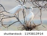 egret heron  waterfowl  flying... | Shutterstock . vector #1193813914