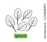 spinach hand drawn vector... | Shutterstock .eps vector #1193838907