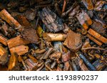 close up of wood texture... | Shutterstock . vector #1193890237