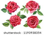 Stock photo set red rose beautiful flower on an isolated white background watercolor illustration botanical 1193938354