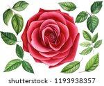 set red rose  beautiful flower... | Shutterstock . vector #1193938357