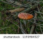 amanita muscaria mushroom in... | Shutterstock . vector #1193984527