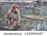 snow monkeys in a natural onsen ... | Shutterstock . vector #1193994697