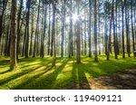Pine Agroforestry. Boa Keaw...