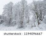 forest  snowy trees in winter.    Shutterstock . vector #1194096667