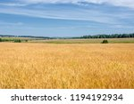 summer photography. the wheat... | Shutterstock . vector #1194192934