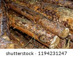 felled logs of trees in the... | Shutterstock . vector #1194231247