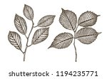 hand drawn twig of tree with... | Shutterstock .eps vector #1194235771