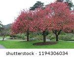 sakura flowers in botanic... | Shutterstock . vector #1194306034
