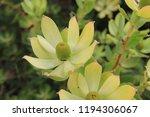 flowers in botanic gardens  san ... | Shutterstock . vector #1194306067