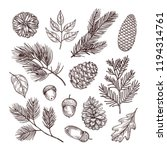 sketch fir branches. acorns and ... | Shutterstock .eps vector #1194314761