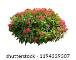 Tropical Flower Plant Isolated...