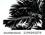 shadow of palm leaf   Shutterstock . vector #1194341074