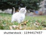 kitten cat cute | Shutterstock . vector #1194417457