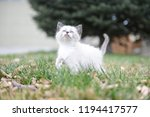 kitten cat cute | Shutterstock . vector #1194417577