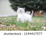 kitten cat cute | Shutterstock . vector #1194417577