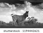 black and white art photo....   Shutterstock . vector #1194442621