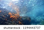 astroides calycularis stony cup ... | Shutterstock . vector #1194443737