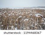 winter landscape. the river... | Shutterstock . vector #1194468367