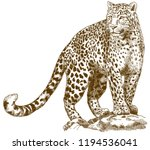 antique engraving drawing... | Shutterstock . vector #1194536041