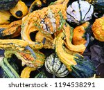Decorative Gourds Flat Lay...