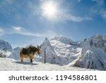 winter landscape. shaggy yak... | Shutterstock . vector #1194586801